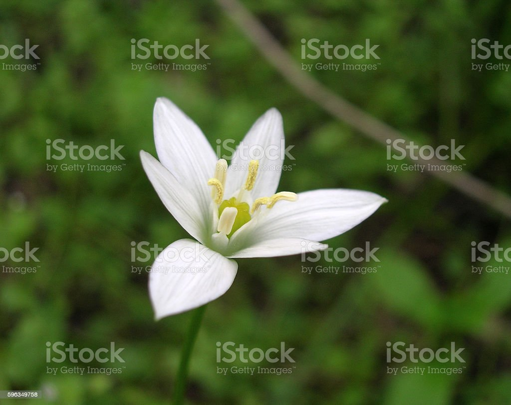 Eco natural flower, symbol of purity and freshness royalty-free stock photo
