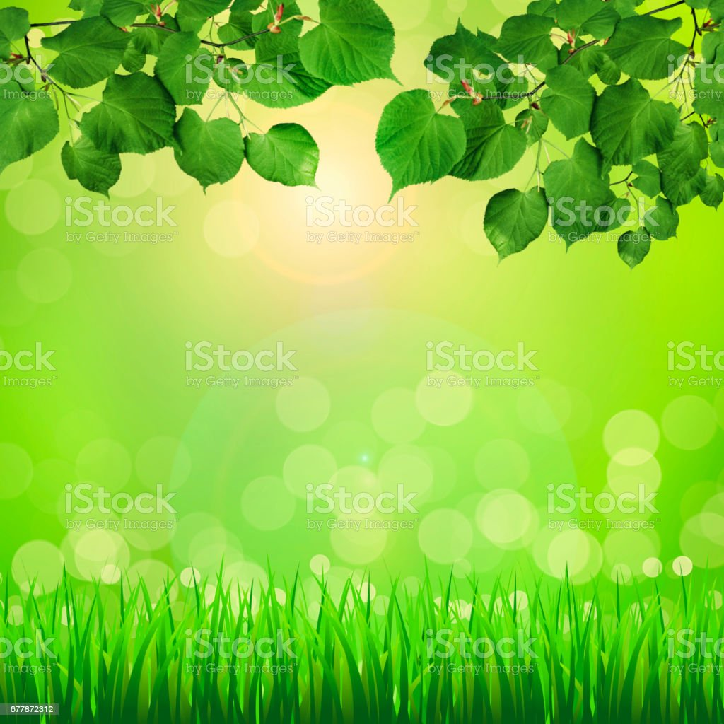 Eco nature green abstract defocused background stock photo