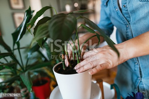 Woman arranging plants and flowers to decorate the living space.