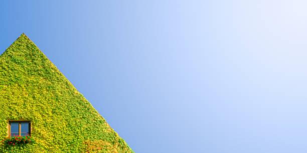Umweltfreundliches Haus mit einsamem Fenster in grünen Efeupflanzen am sonnigen Tag und blauem Himmel mit direktem Licht und Kopierraum für Text, Details – Foto