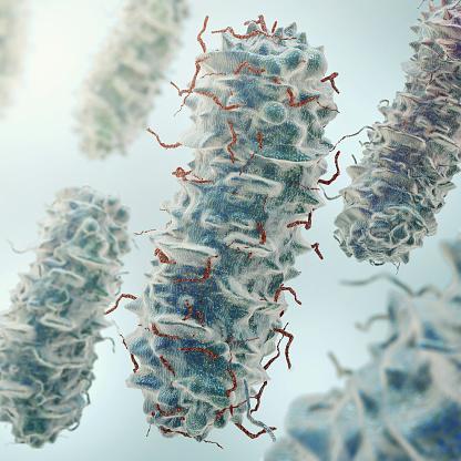 Bakterią Ecoli - zdjęcia stockowe i więcej obrazów Abstrakcja