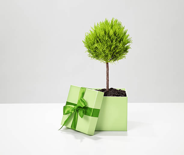 Ecologic gift stock photo
