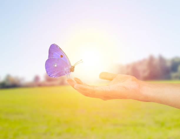 Ecological butterfly picture id1012472300?b=1&k=6&m=1012472300&s=612x612&w=0&h=s w6fpfw0lfcsusbokkadbe4fvqs15fst72bgzqgjv0=