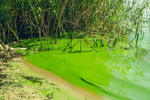 Ecological crisis. Swampy river