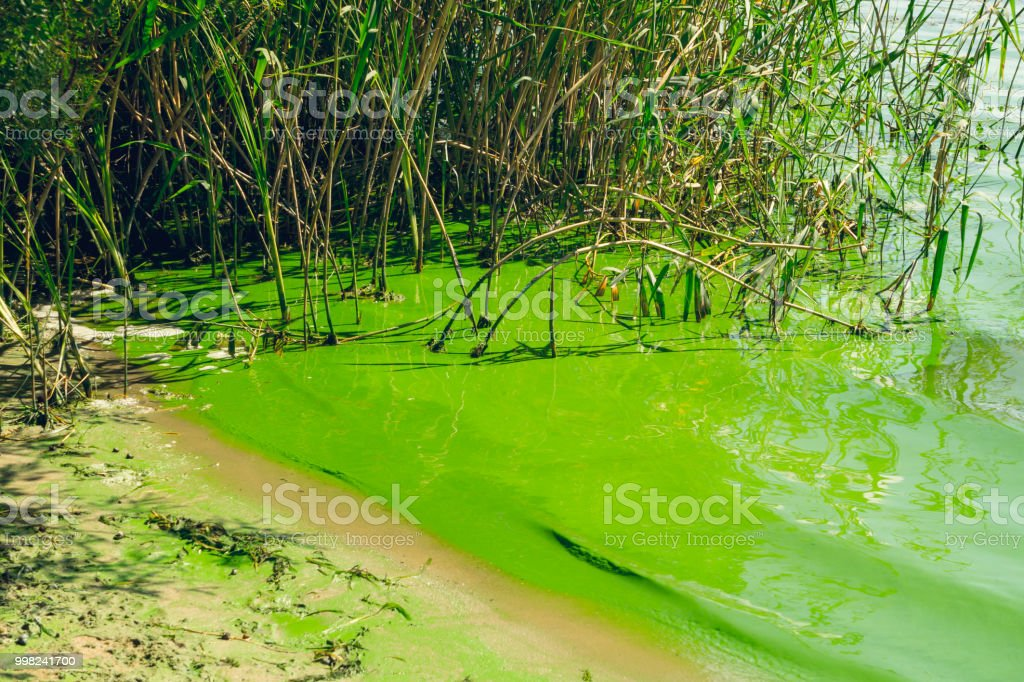 Ecological crisis. Swampy river stock photo