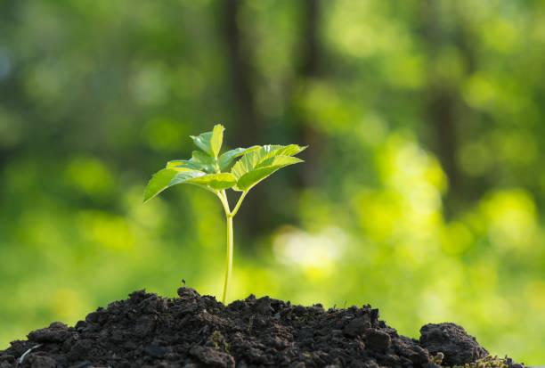 Ökologische und nachhaltige Umwelt-Konzept mit Baumpflanzungen auf freiwillige Hände wachsen – Foto