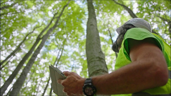 Biologist environmentalist examining the condition of the forest and the trees. Environmental conservation.