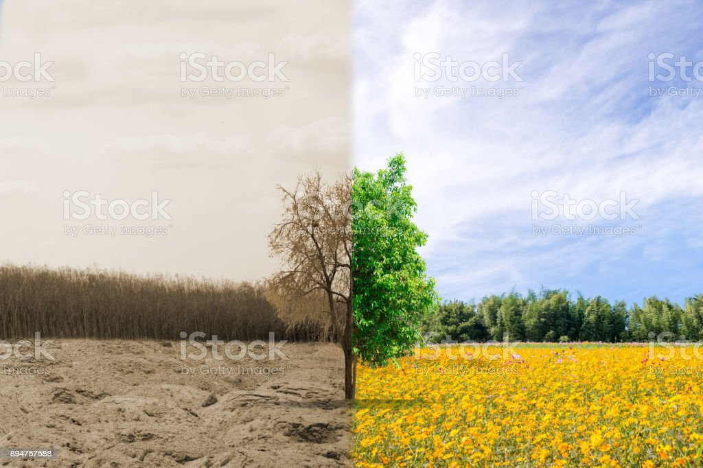 Ecology concept forest drought and forest refreshing stock photo