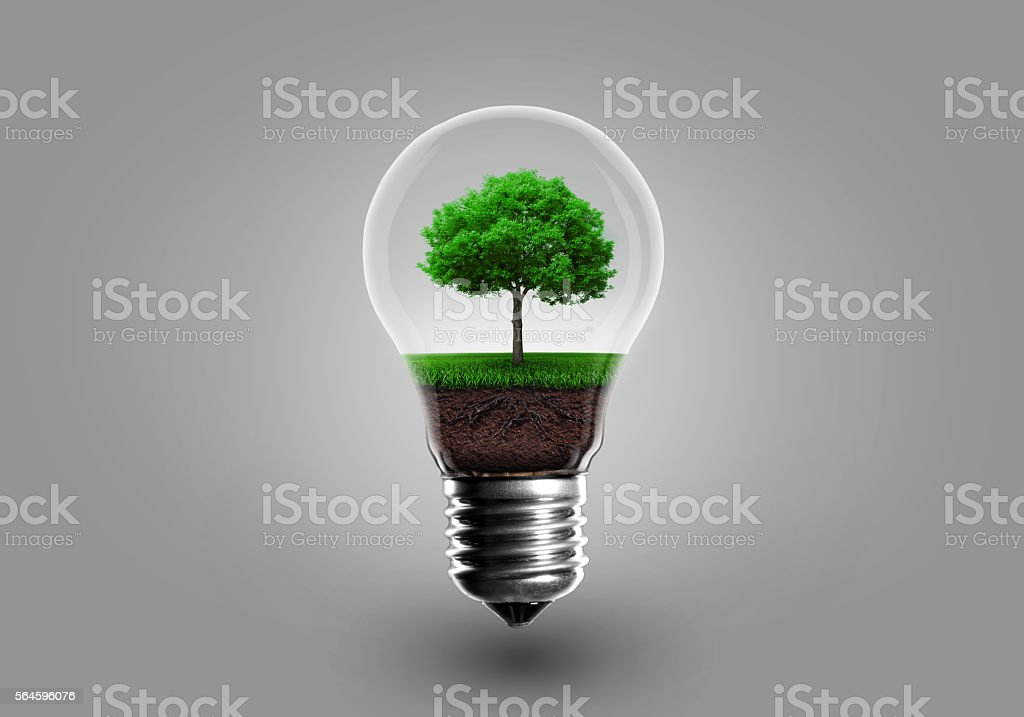 Ecology Concept. Green tree growing in light bulb stock photo