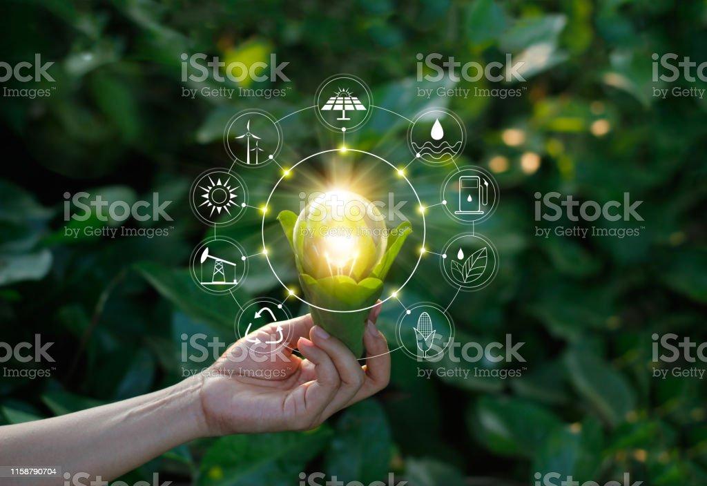 生態概念。手握燈泡反對自然綠葉與圖示能源可再生,可持續發展,節約能源。 - 免版稅仔細考慮圖庫照片