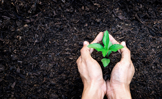 Ecology concept hands holding plant a tree sapling with on ground