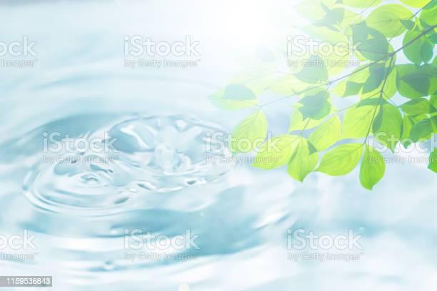 Ecology picture id1159536843?b=1&k=6&m=1159536843&s=612x612&h=tv3pzzkg 9rzorpgsbl6hgyup4ay y2bzgn15hihh9g=