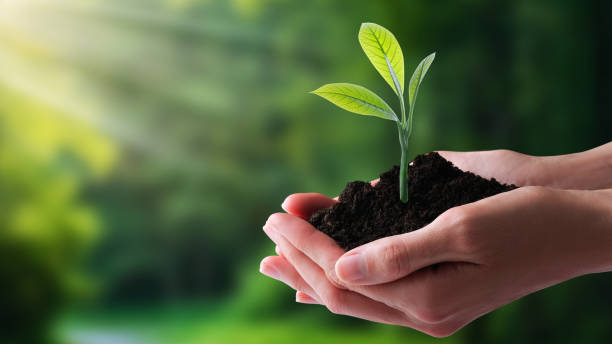 Ecology, protection of natural environment, earth day concept. stock photo