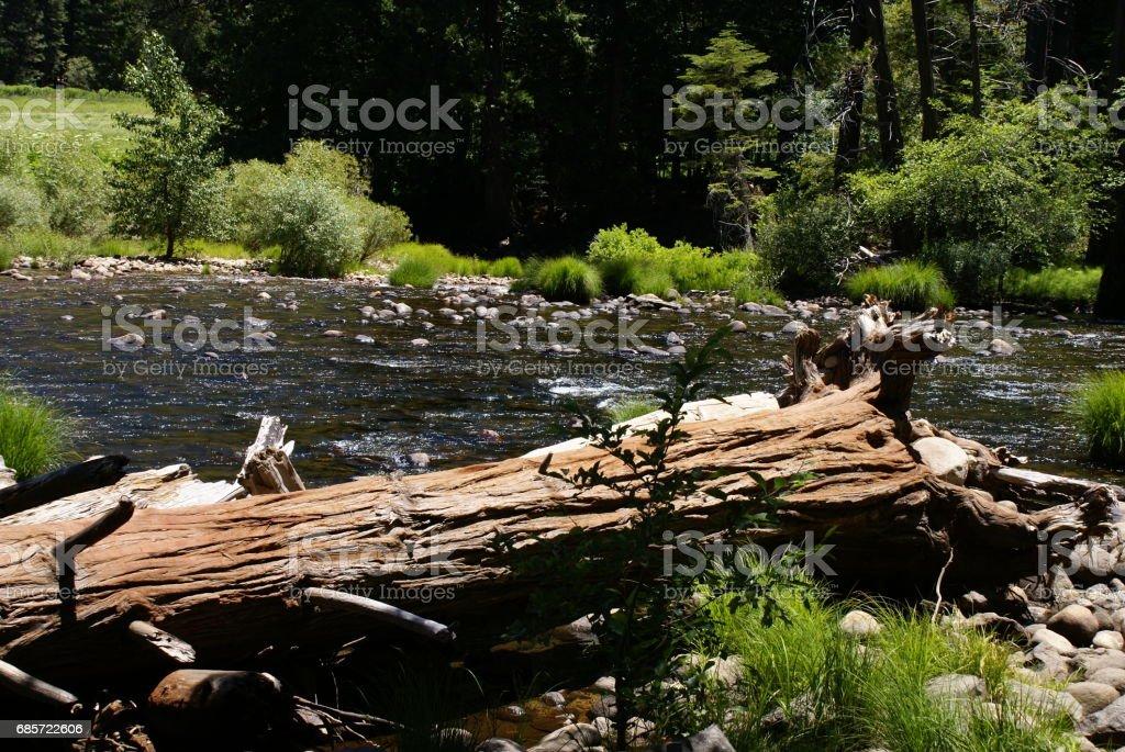 Ecosystem Lizenzfreies stock-foto