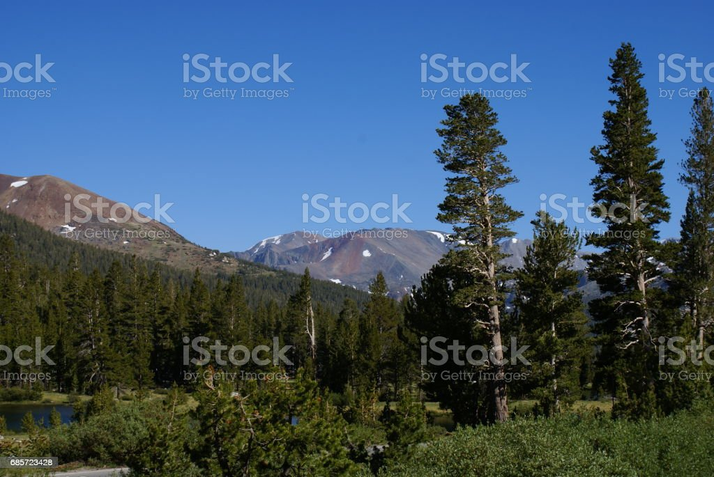 Ecosystem 免版稅 stock photo