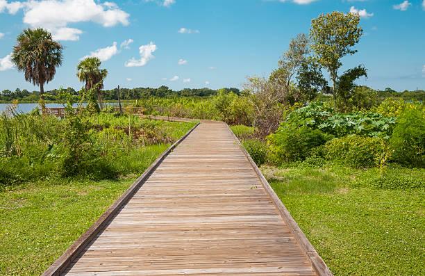 Ecotourism: Boardwalk in Florida stock photo