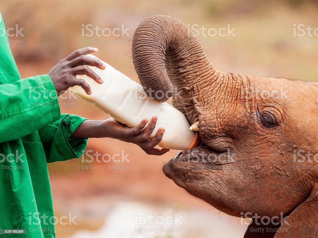 象の良いエコツーリズムエリアに ストックフォト