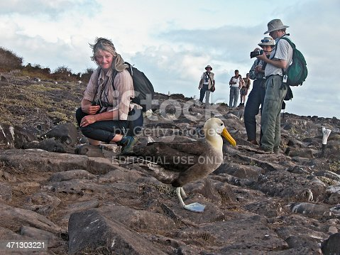 Espanola, Galapagos, Ecuador - 18th July, 2005: A group of eco-tourists visiting the endemic Waved Albatross - Phoebastria irrorata - colony on Espanola Island, Galapagos. The white-painted markers show the boundaries within which visitors must stay. The wildlife can wander anywhere!