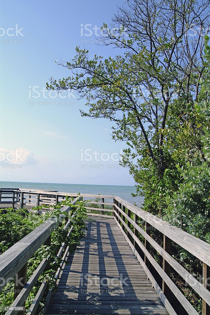 Eco-walk royalty-free stock photo