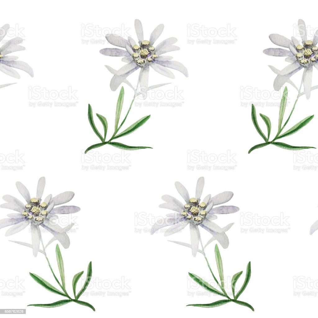 edelweiss flower symbol alpinism alps germany logo set stock photo