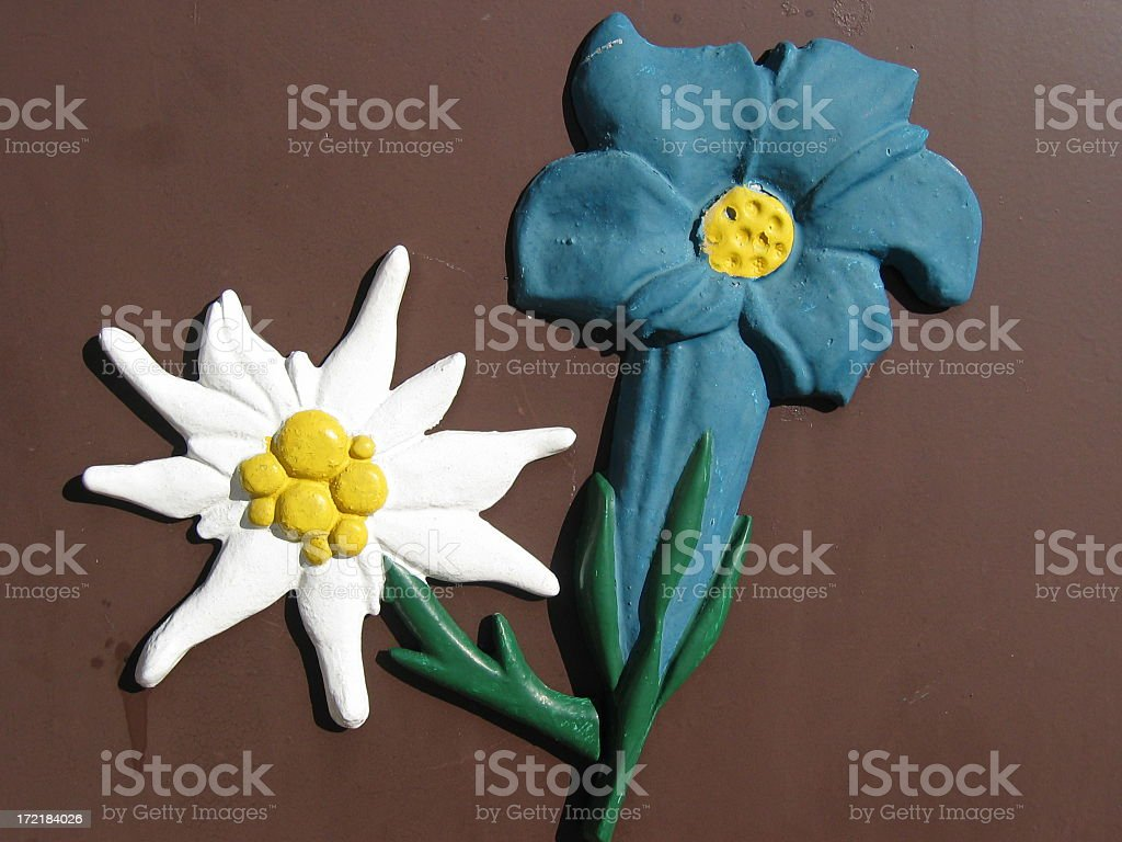 Edelweiss on the wall royalty-free stock photo