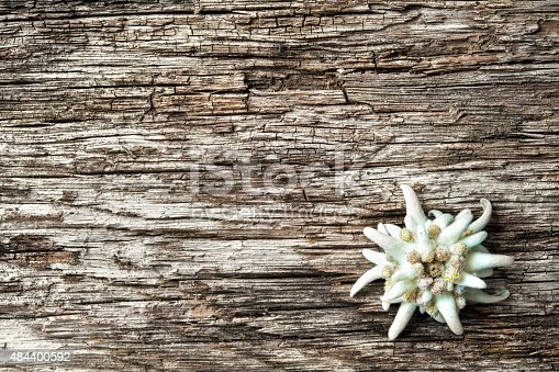istock Edelweiss on wooden background 484400592
