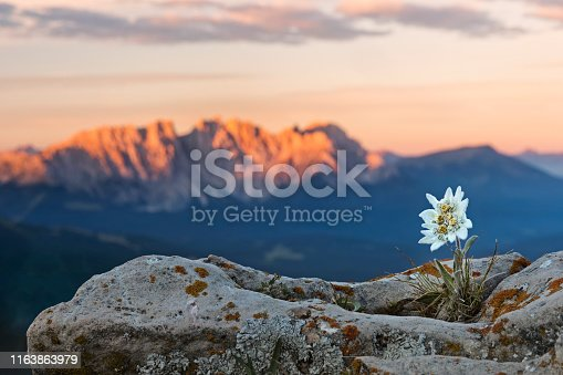 Plant, Flower, Rock - Object, Shape, Single Flower