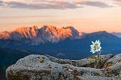 Plant, Flower, Rock - Object, Shape, Single Flower