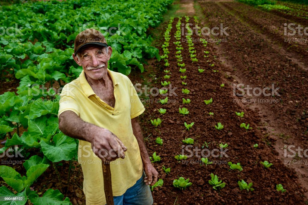 Ederly farmer at plantation stock photo