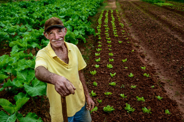 Ederly farmer at plantation stock photo