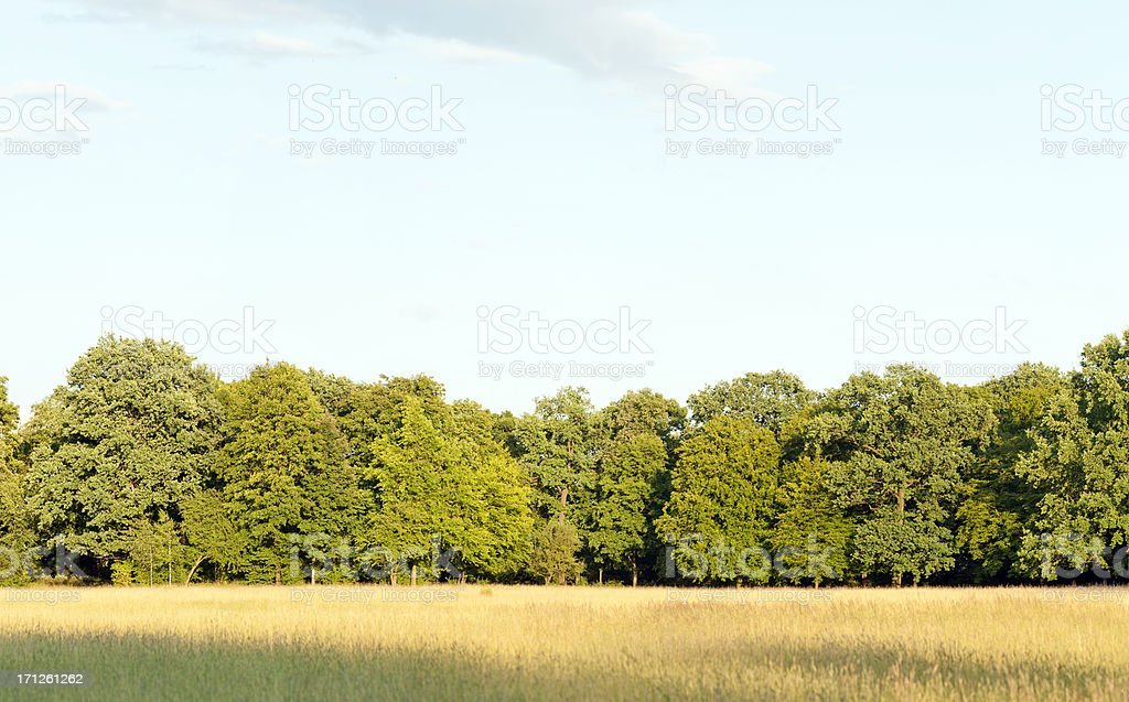 Edge of a deciduous wood with summer meadow infrontof. stock photo