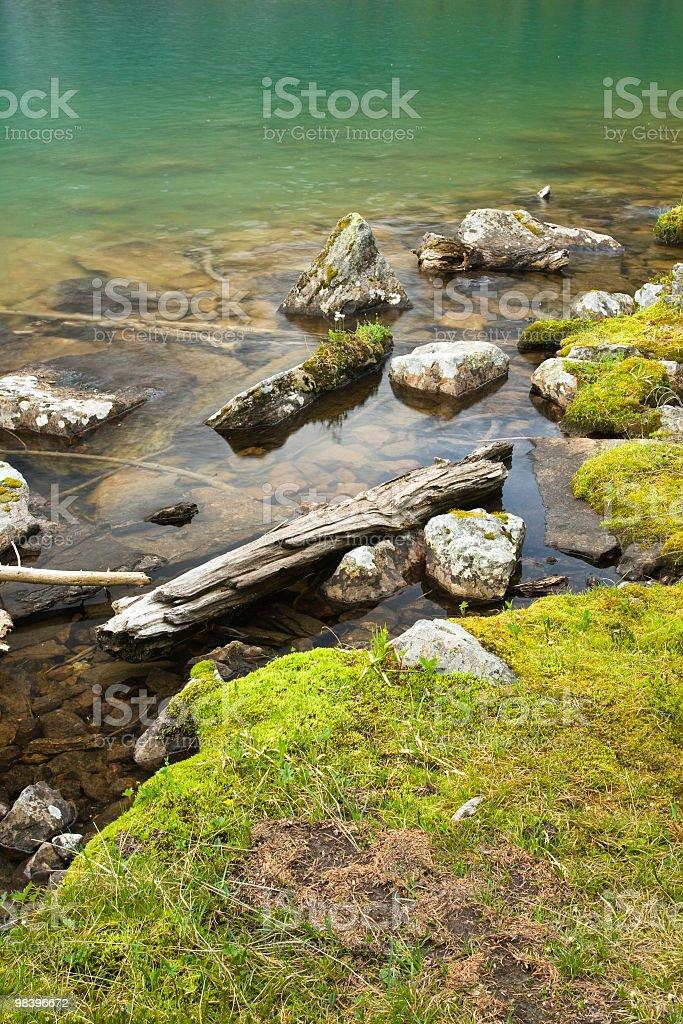 Edge Of A Green Lake royalty-free stock photo