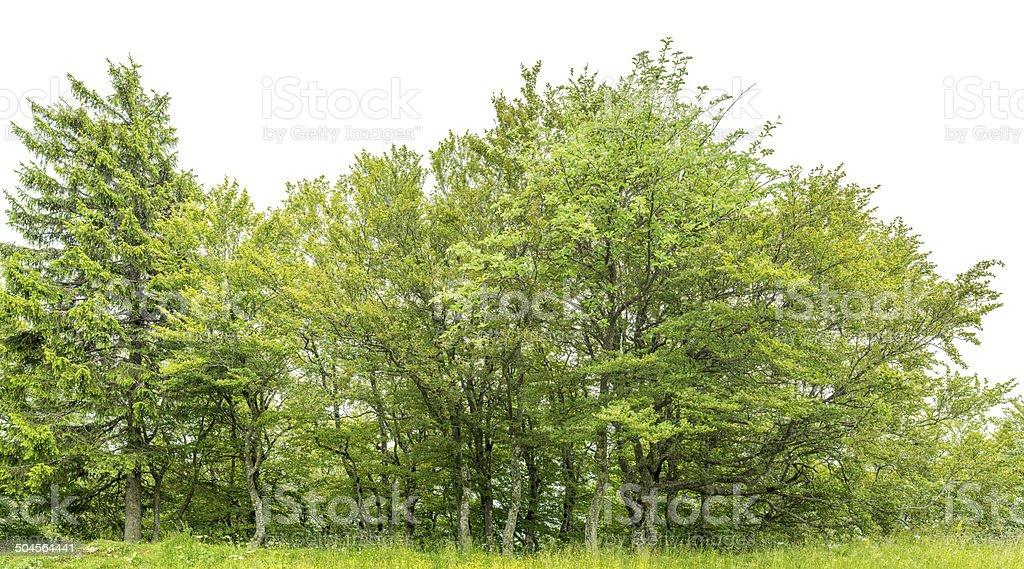 Borde de una zona de madera aislada en blanco con prado. - foto de stock