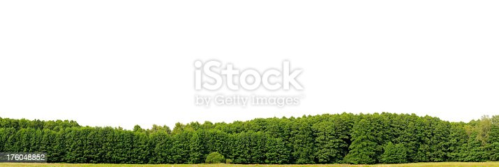 A panoramic photo of a bright-green edge of a wood against a white sky. Mainly Alnus glutinosa or Alder trees dominate the photo, which features a typical, native vegetation along brooks and creeks of Europe. This photo has a large resolution of more than 300 Megapixels.