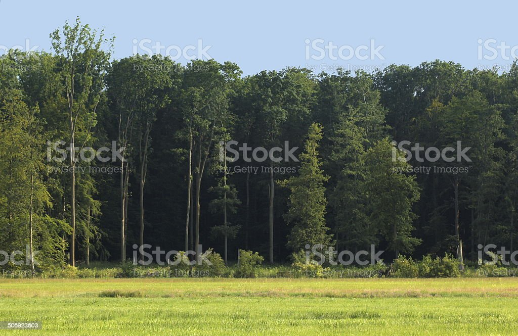 Edge Of A Wood stock photo