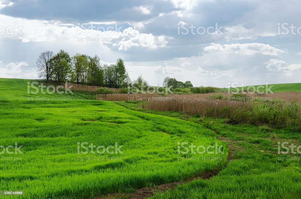 Edge of green field sown agricultural crop royalty-free stock photo