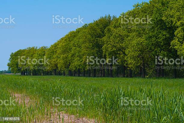 Photo of Edge of lush green forest with a bright blue sky