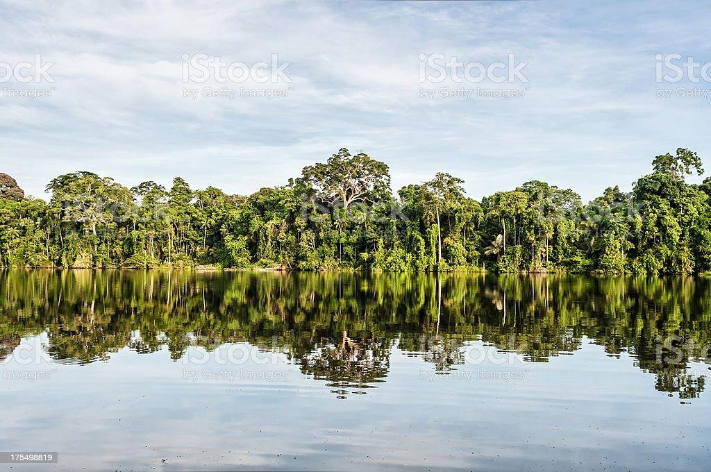 Regenwald in Peru Lizenzfreies stock-foto