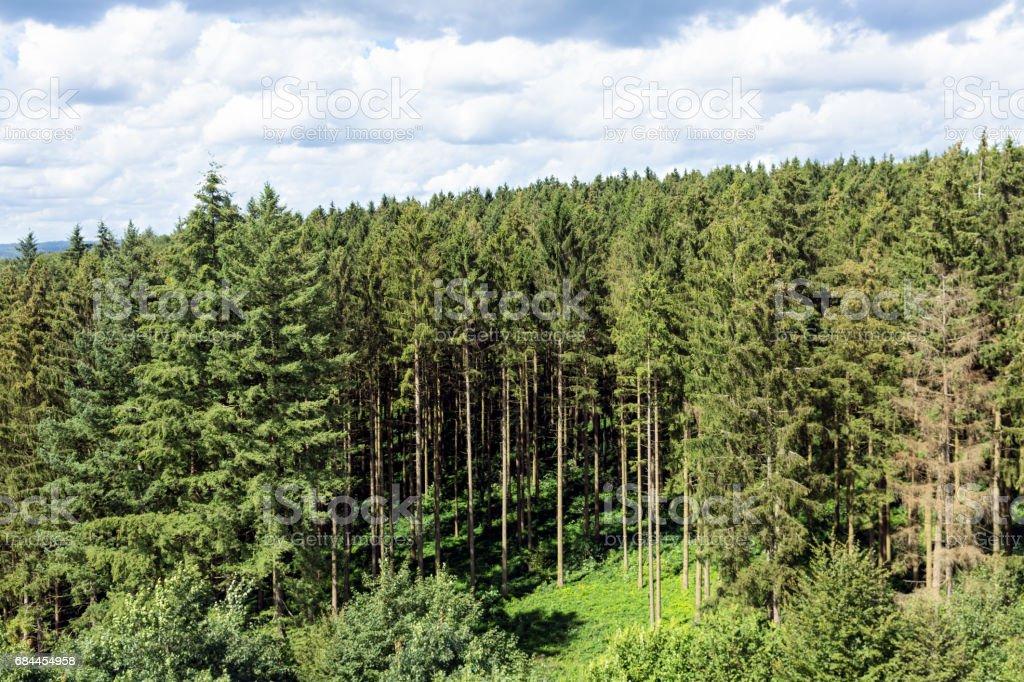 Edge of the forest near Bouillon in Belgium - Photo