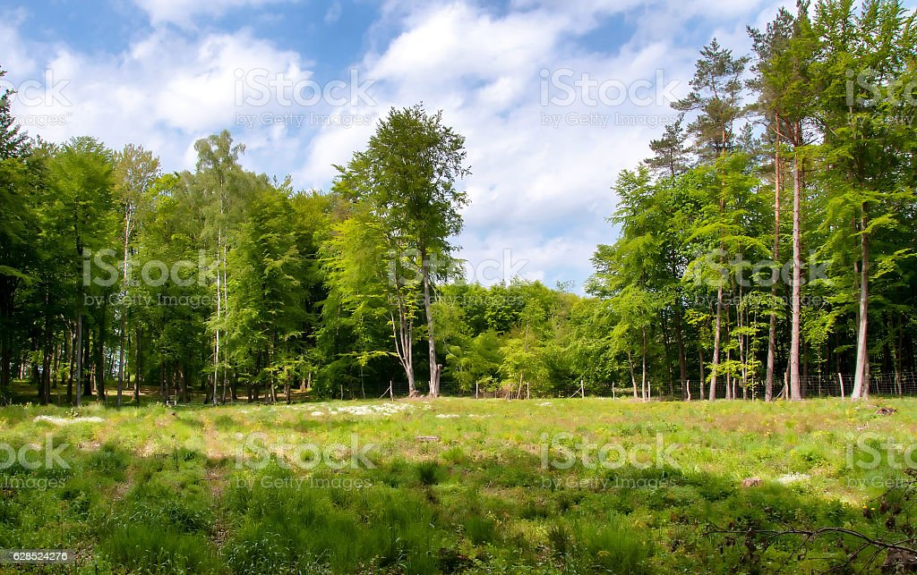 Edge of the forest stock photo