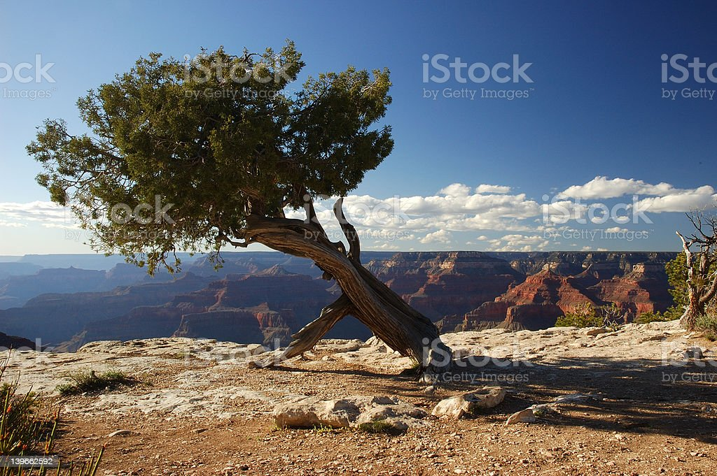 Edge of the Grand Canyon royalty-free stock photo