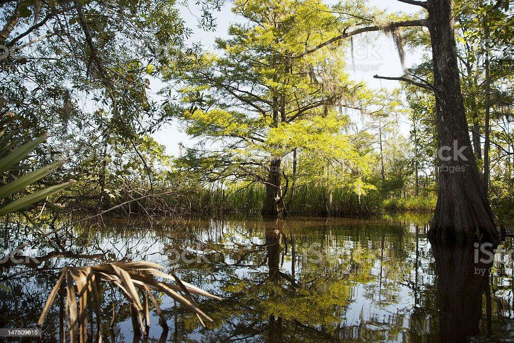 Edge of the Swamp stock photo
