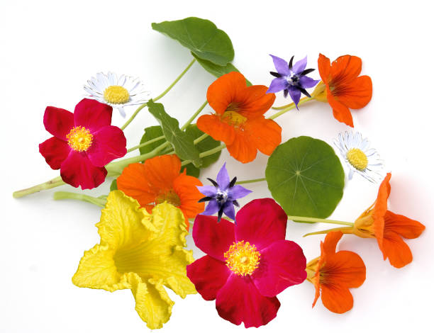 essbar; Blüte; Essen; Blume – Foto