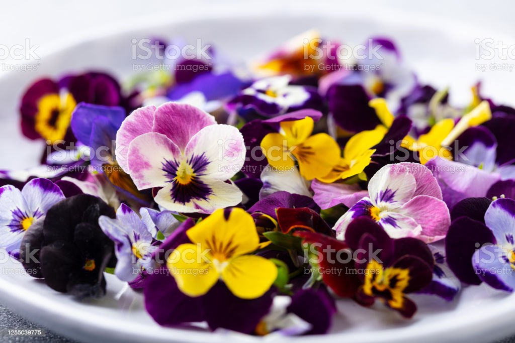 Edible Flowers Field Pansies Violets On White Plate Grey Background Close Up Stock Photo Download Image Now Istock