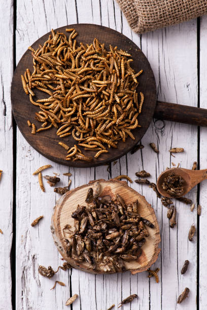 edible fried worms and crickets high angle shot of a pile of fried worms seasoned with garlic and herbs, and a pile of fried crickets seasoned with onion and barbecue sauce, in wooden trays, on a rustic white wooden table annelid stock pictures, royalty-free photos & images
