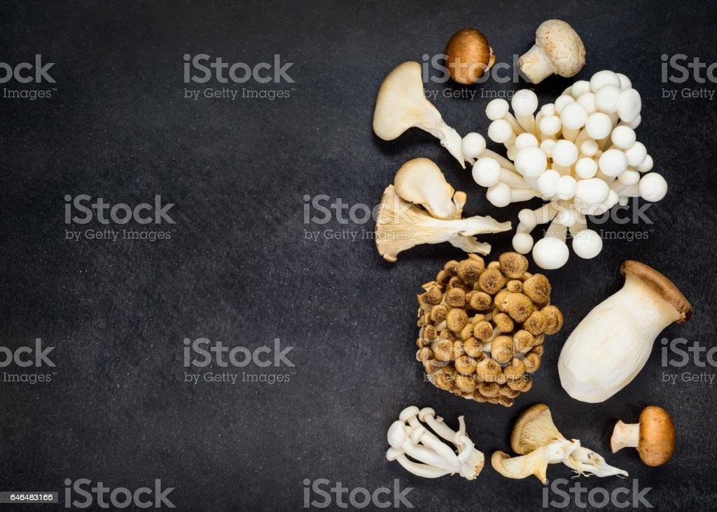 Edible Fungi Mushriooms on Copy Space stock photo