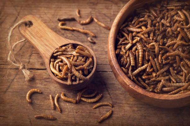 Essbare Mehlwürmer – Foto