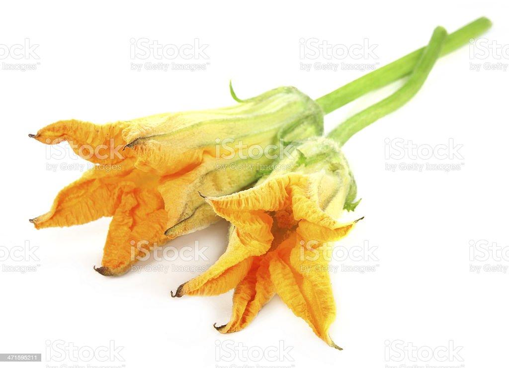 Edible pumpkin flower stock photo