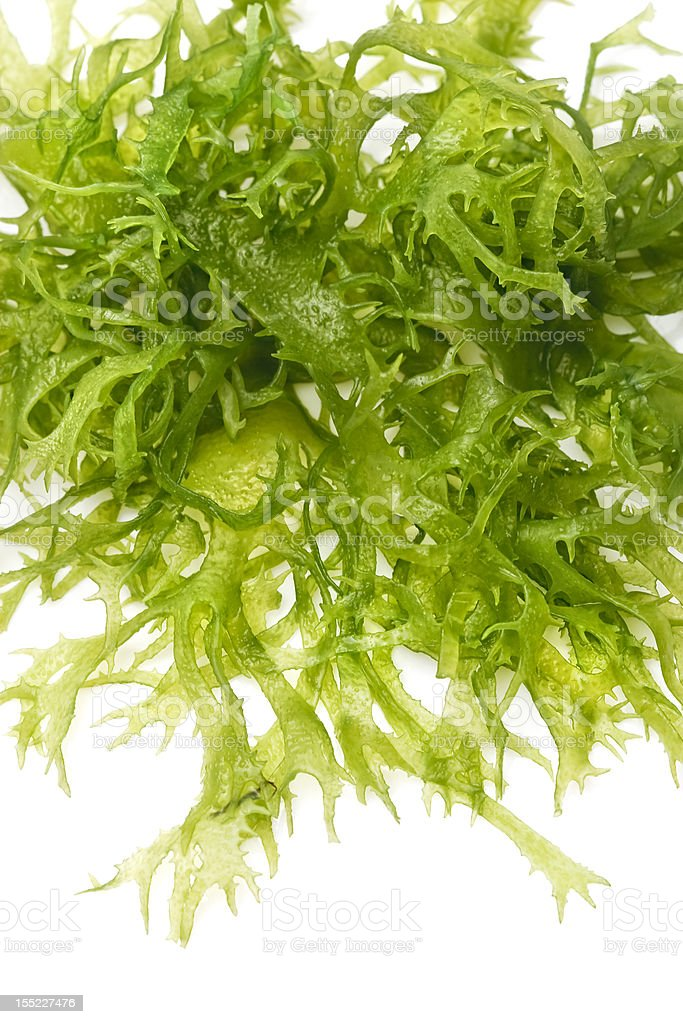 Edible seaweed salad stock photo