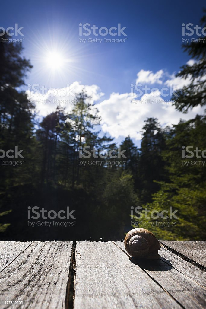 edible snail lying on wooden planks with trees and sun royalty-free stock photo